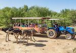 Ostrich Show Farm
